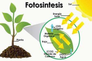 Contoh Makalah Biologi Fotosintesis Sebagai Proses Dasar