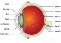 Contoh Makalah Fisika Tentang Alat Optik