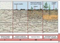 Contoh Makalah Geografi Proses Pembentukan Tanah